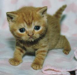 när äter kattungar vanlig mat