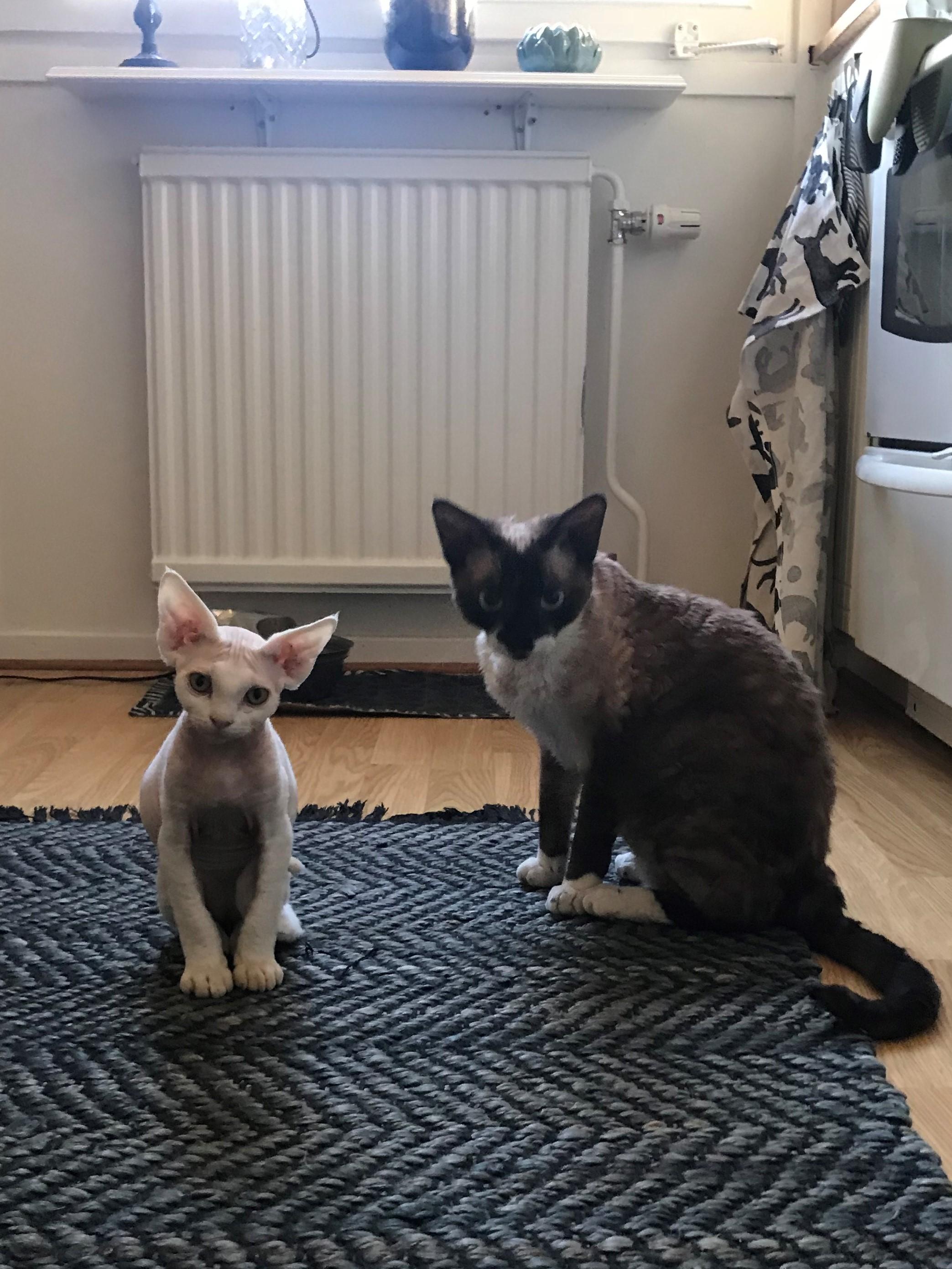 katten är lös i magen